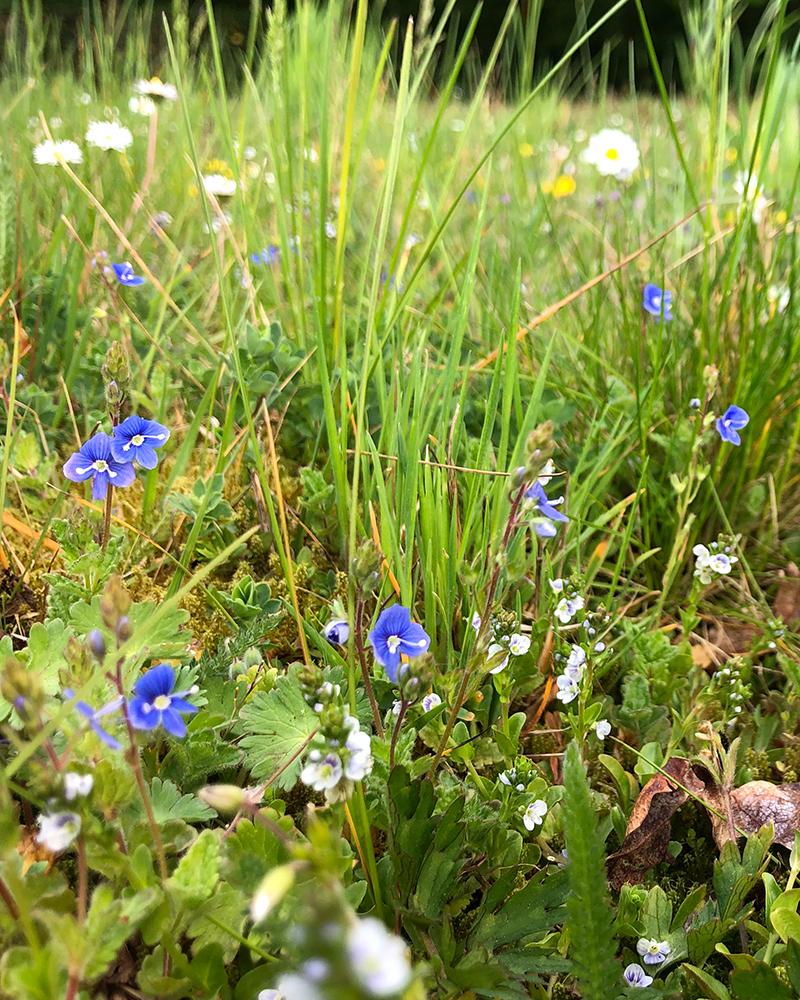 Bloemrijk grasland hovenier Paul Bluemink